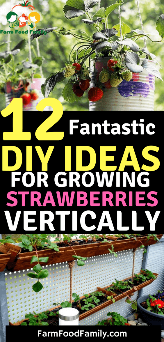 12 Fantastic DIY Ideas For Growing Strawberries Vertically. Want to grow so many strawberries in so little space? Try one of these vertical DIY ideas for growing strawberries!