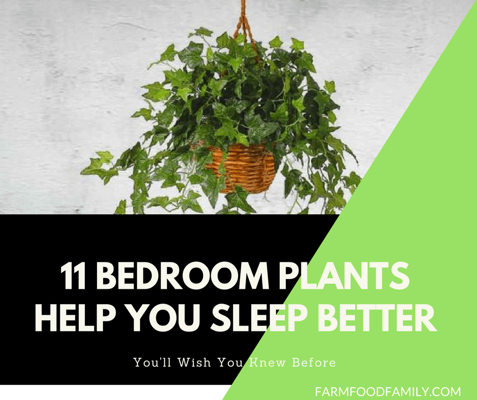11 Bedroom Plants That Help You Sleep Better Every Night