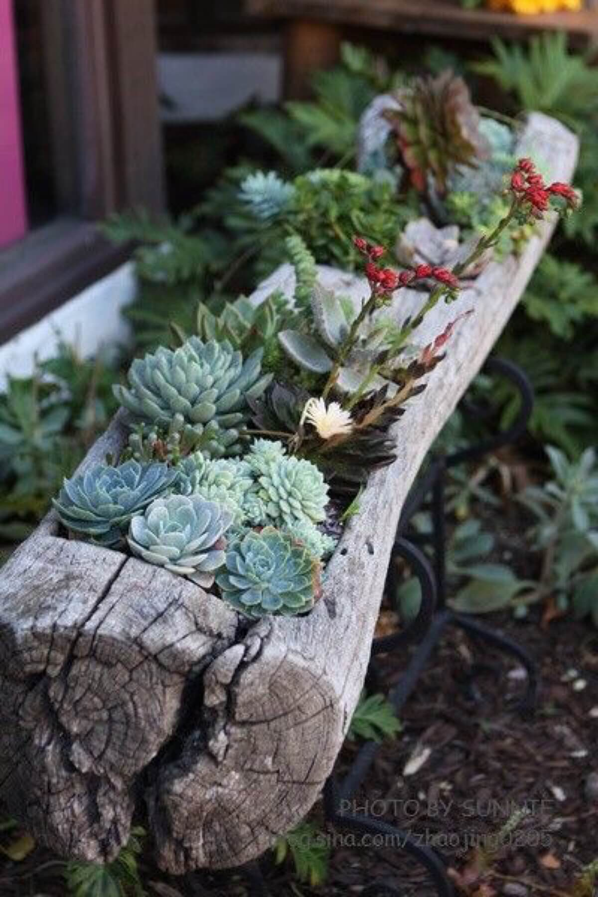 Succulent Garden Ideas: By The Old Water Trough