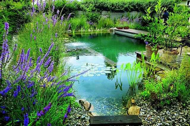 BACKYARD SWIMMING HOLE