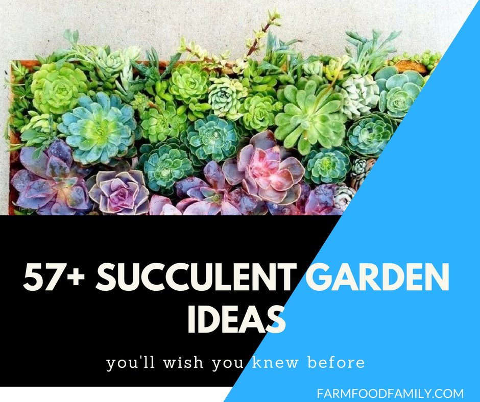 57+ Best Succulent Garden Ideas With Tutorials (PICTURES