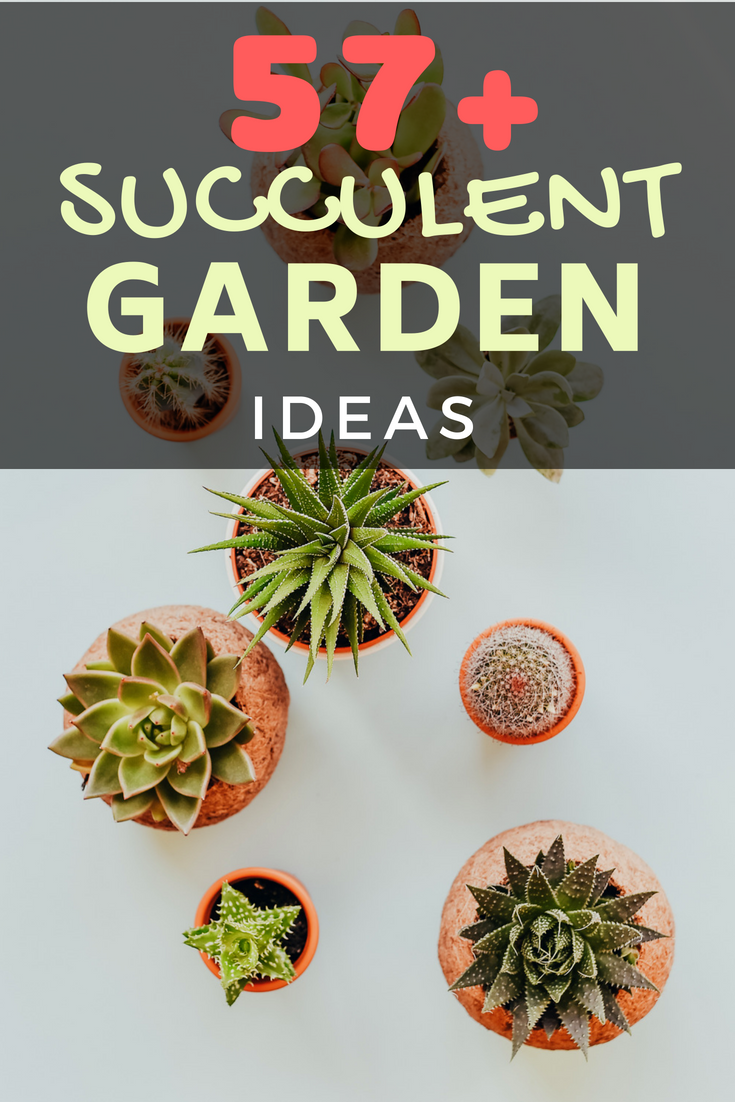 Look at 57+ fascinating succulent garden ideas. You will definitely find them interesting. The succulents are an impeccable option for decorating a house.