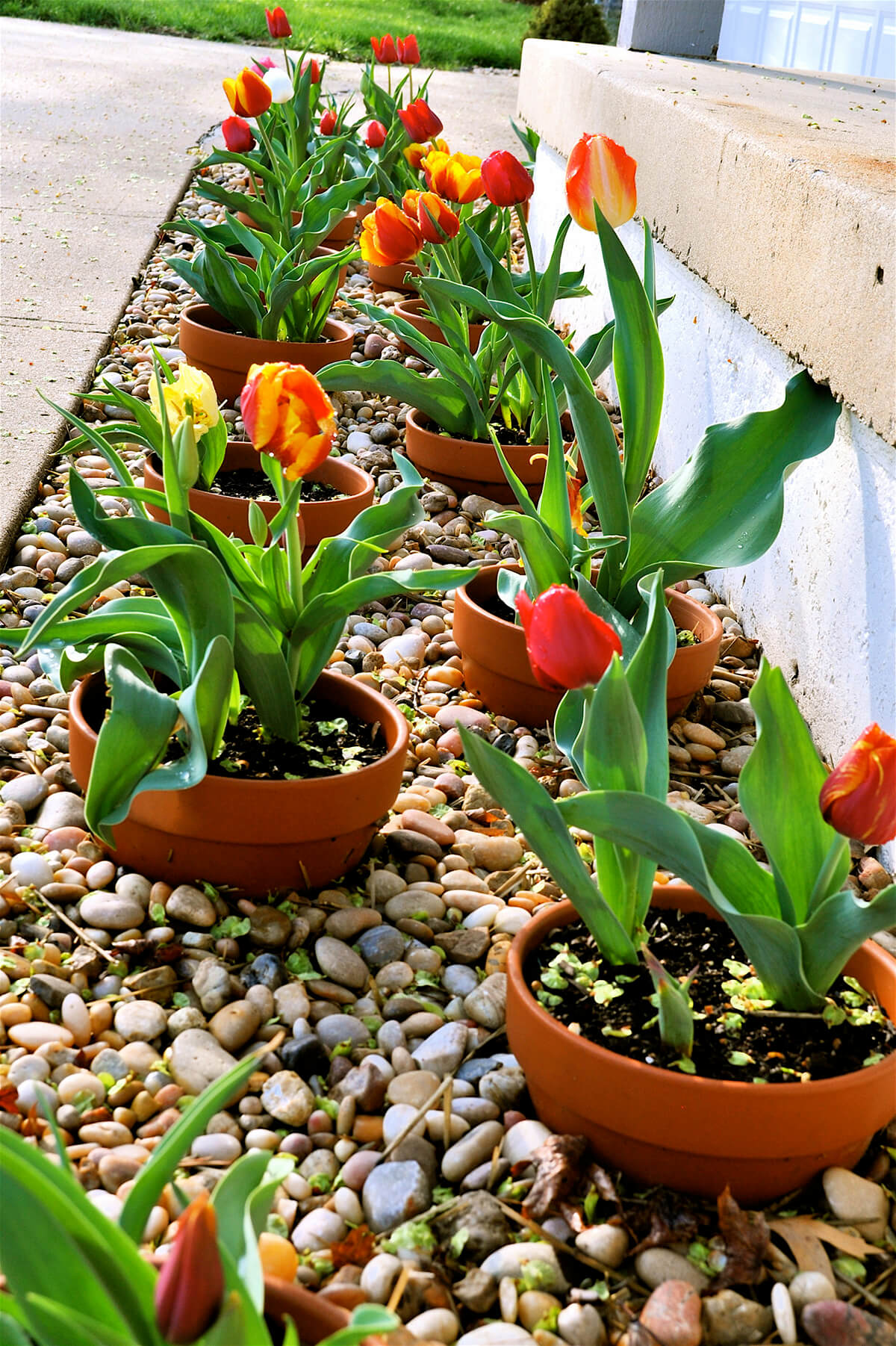 Flower Bed Ideas: Flower Bed with Clay Pots