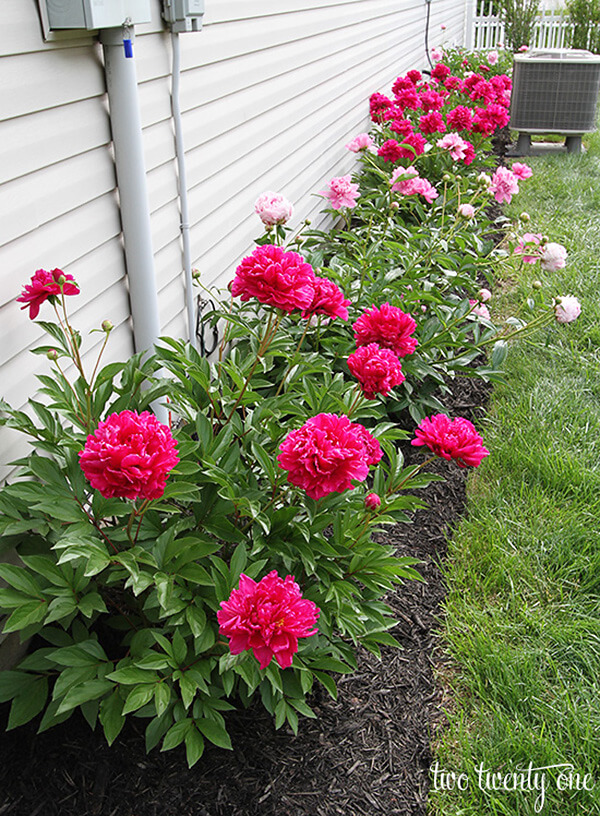 Flower Bed Ideas: Easy DIY Peony Flower Bed