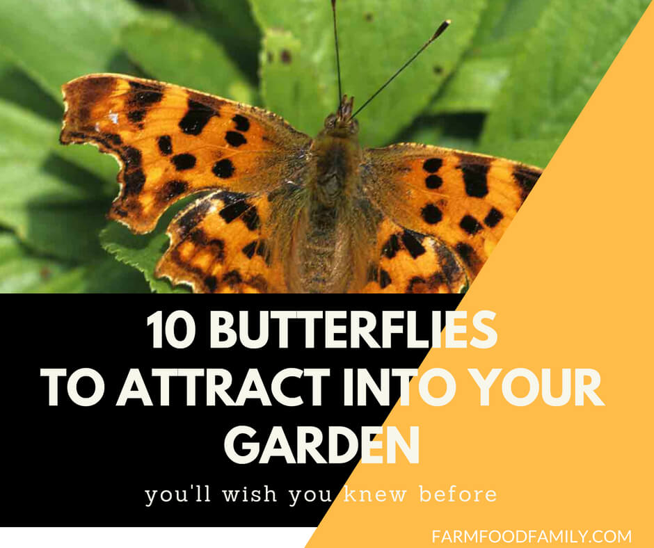 10 Butterflies To Attract Into Your Garden