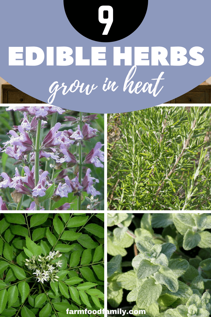 We have the suite of subtropical Asian flavors: cardamom, ginger, galangal, lemongrass, kaffir lime and perennial coriander. Want more inspiration? Here are my edible herbs summer-lovin' top 10.
