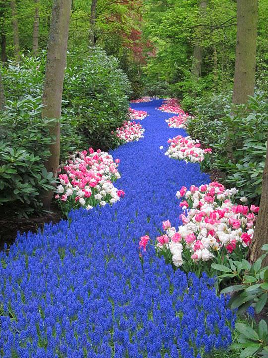Flower Bed Ideas: River of grape hyacinths