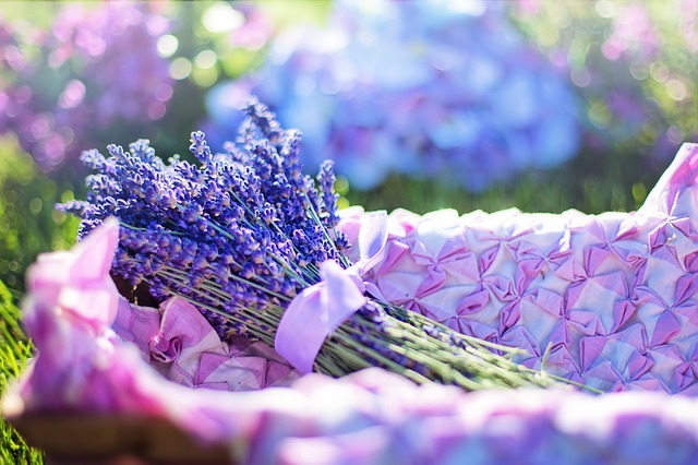 There are numerous species of lavender available and buying one blindly will definitely not help. Different types of lavenders grow in different regions and climatic conditions