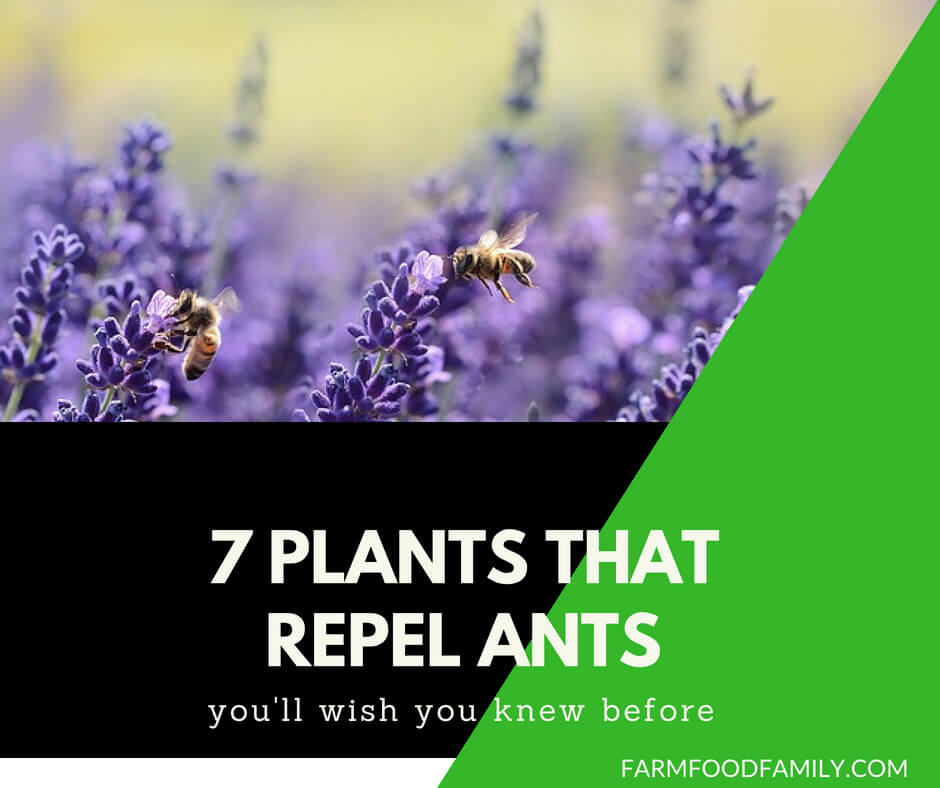 7 Plants That Repel Ants