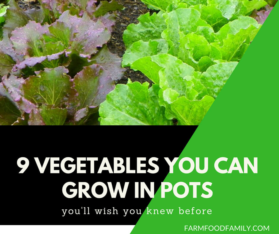 9 Vegetables You can grow in pots