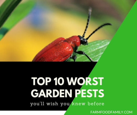10 Worst Garden Pests & How To Control Them