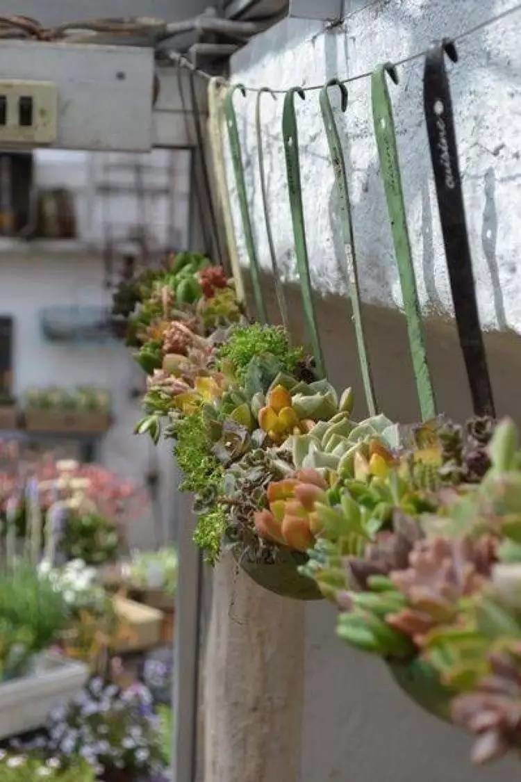 Vintage Garden Decor Ideas: Antique Soup Ladle Succulent Planter Display