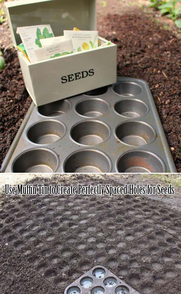 Use Muffin Tin to Create Perfectly Spaced Holes for Seeds | Clever Gardening Ideas on Low Budget