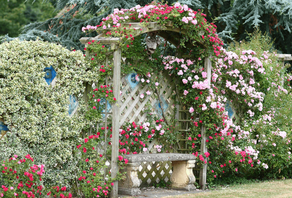 Bench and Arbor with Climbing Roses