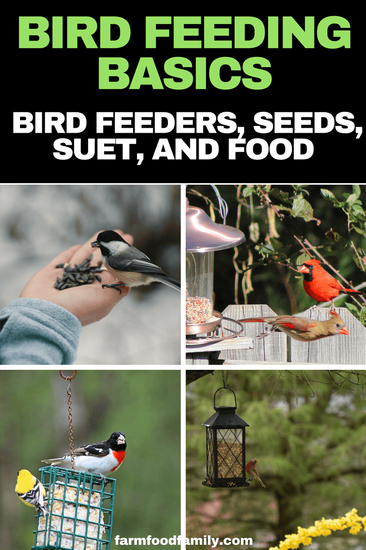 Bird Feeding Basics: what you need to know about bird feeders, seeds, suet, and other food you can use in your own yard