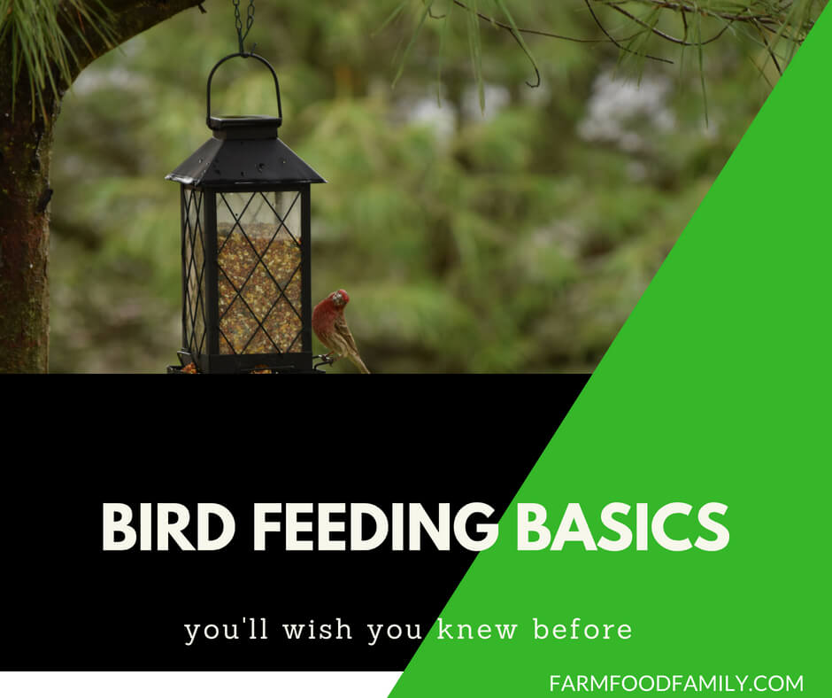 Bird feeding basics
