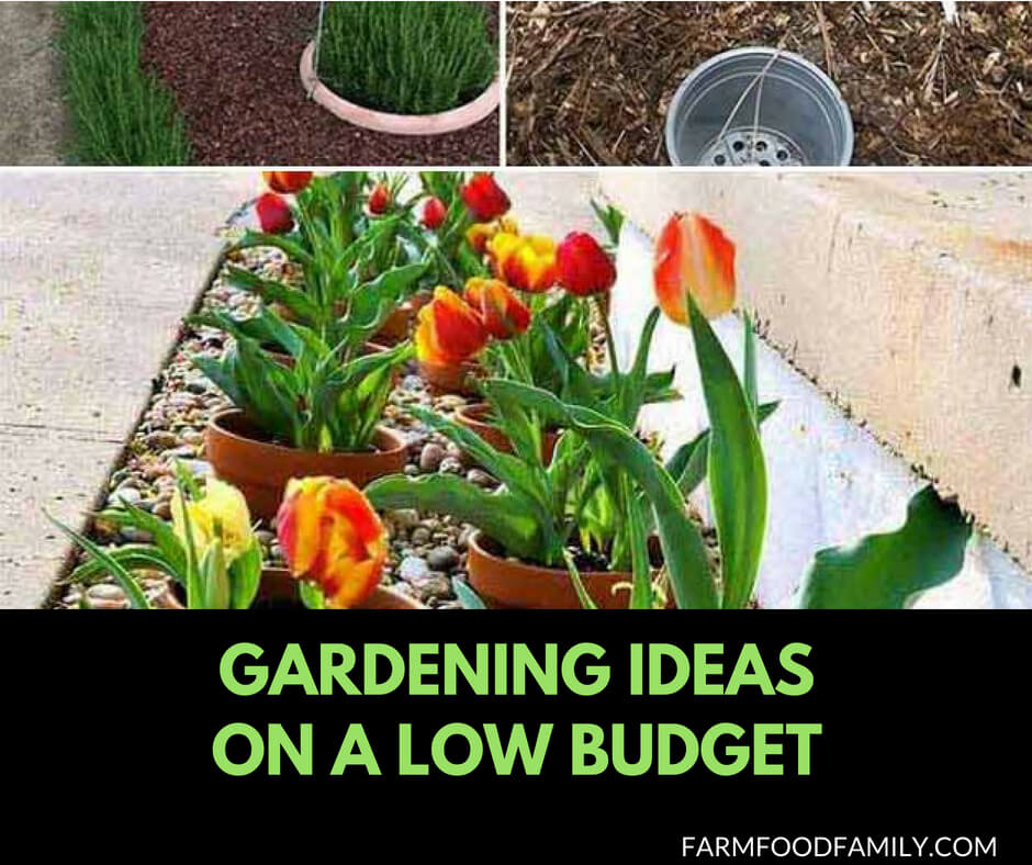 Cheap Gardening Ideas: 21+ Genius Gardening Ideas On Low Budget