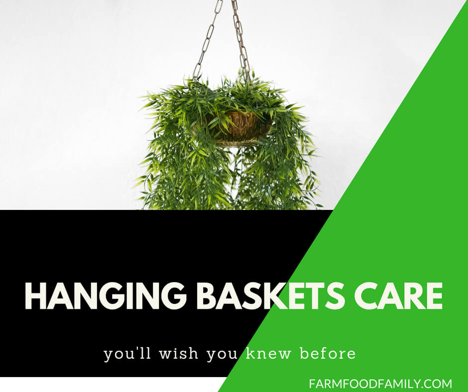 Hanging Baskets Care