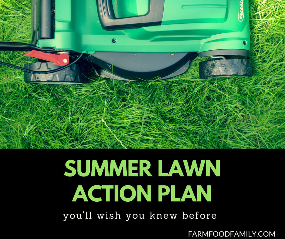 Lawn care tips: Summer lawn action plan
