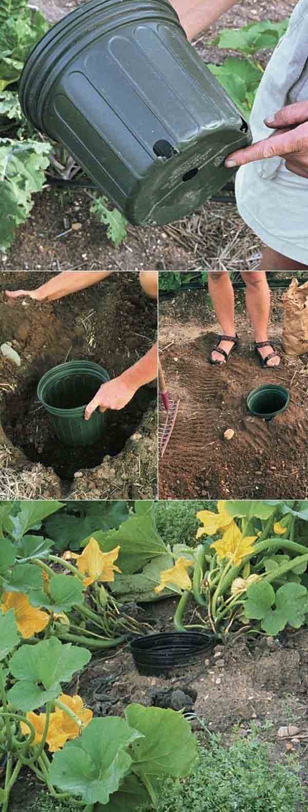 How to Grow Superb Summer Squash