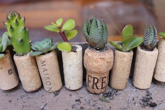 Cork Planter | Low-Budget DIY Garden Pots and Containers