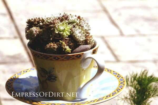 Succulent Teacup | Low-Budget DIY Garden Pots and Containers
