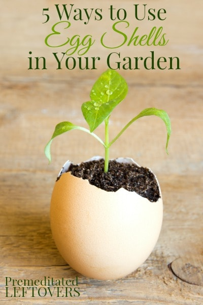 Grow your seeds in egg shells   Gardening Hacks and Trips
