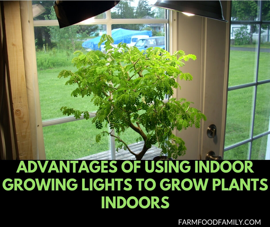 Advantages of Using Indoor Growing Lights to Grow Plants Indoors