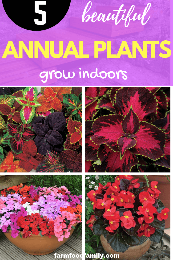 5 annual plants that grow indoors