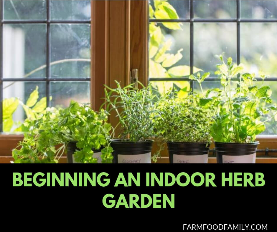 Beginning an indoor herb garden