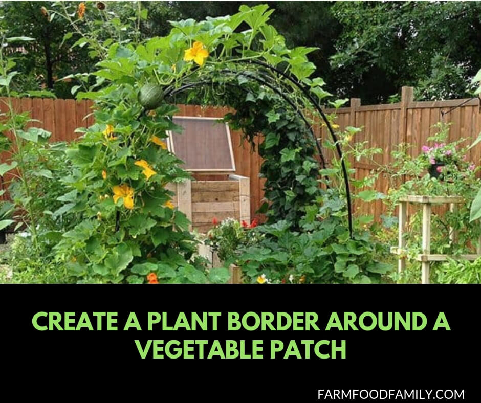 29 Edging Plants for Kitchen Gardens: Create a plant border around a vegetable patch