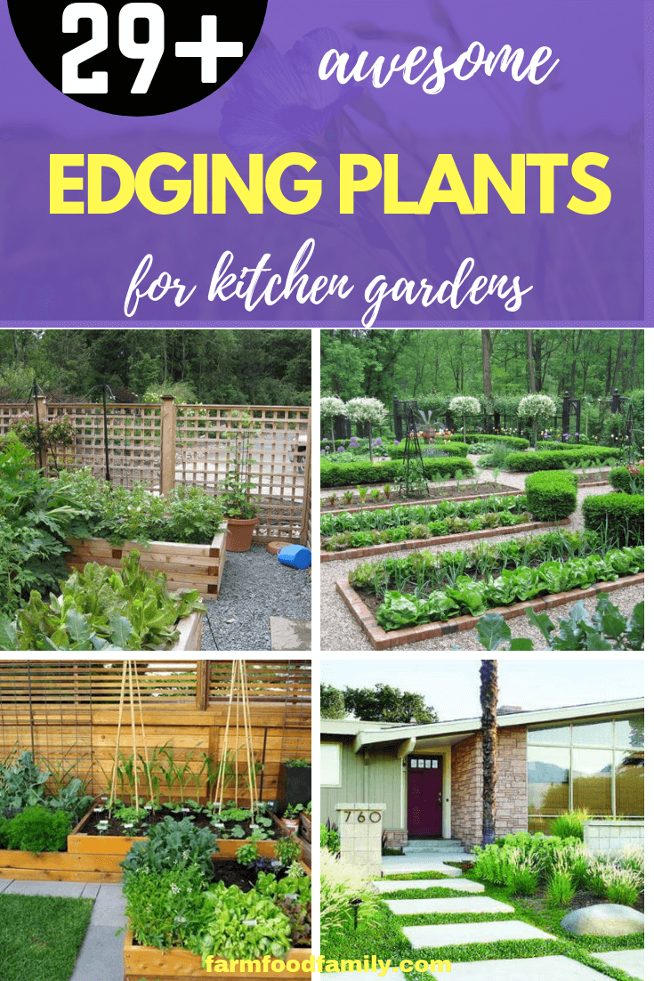 Edging Plants for Kitchen Gardens: Create a Plant Border Around a Vegetable Patch