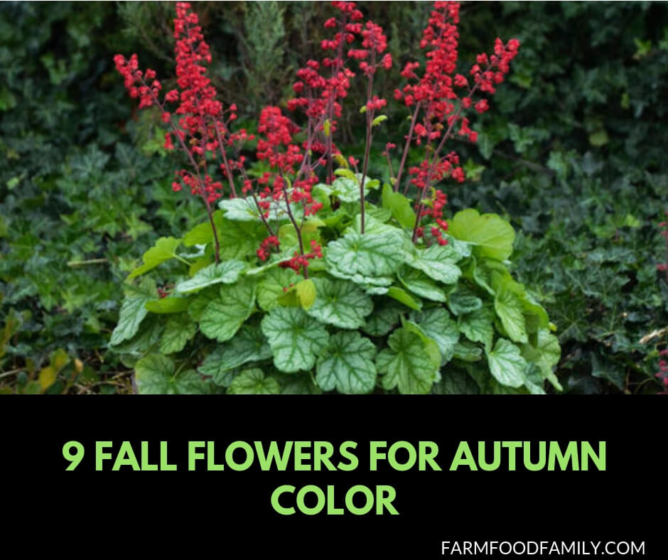 Fall Flowers for autumn color
