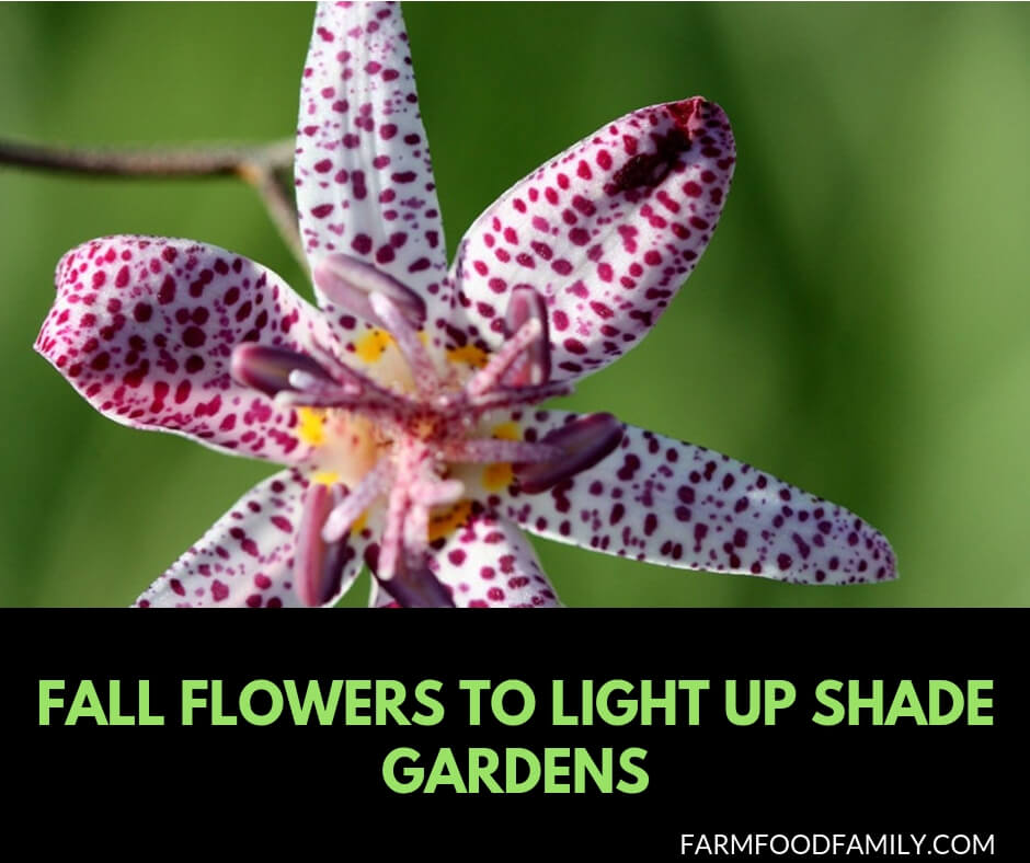 Fall flowers to light up shade gardens