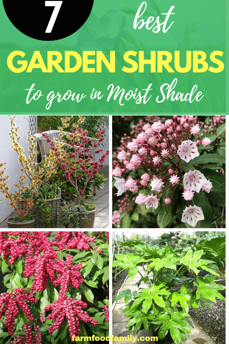 Shrubs to Grow in Moist Shade