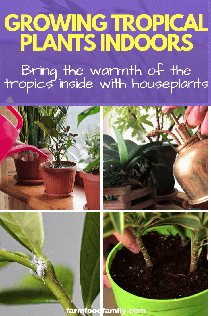 Growing Tropical Plants Indoors: Bring the warmth of the tropics inside with houseplants