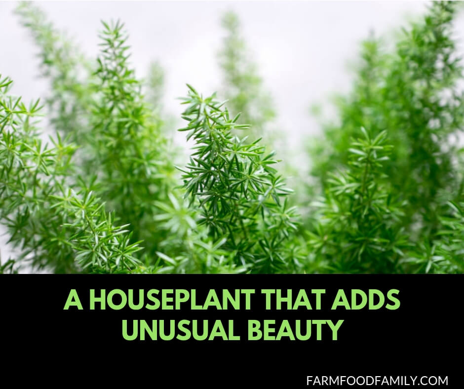 A houseplant adds unusual beauty