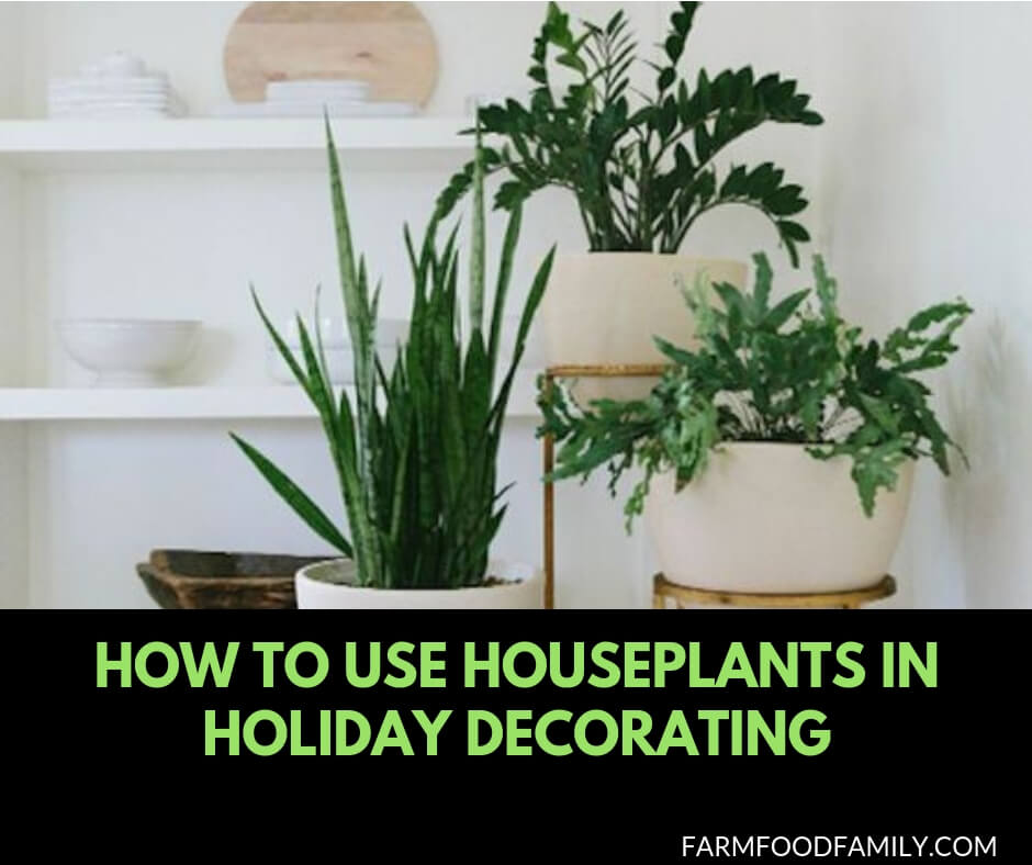 How to use Houseplants in holiday decorating