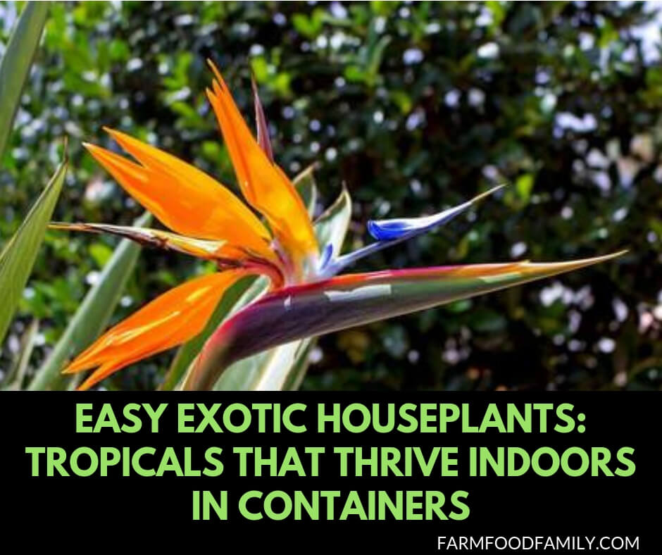 Easy Exotic Houseplants: Tropicals That Thrive Indoors in Containers