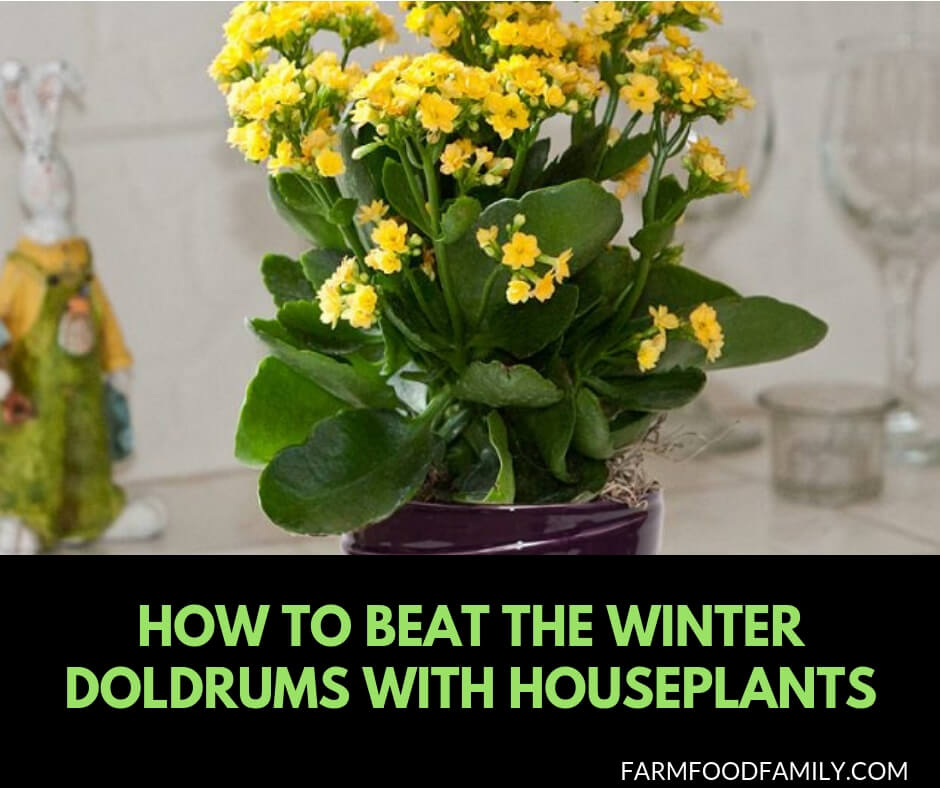 How to beat winter blue with houseplants