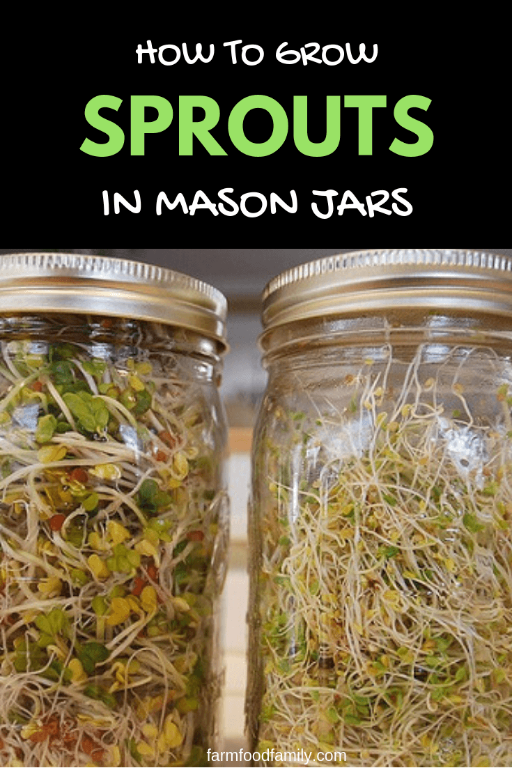 How to grow Vegetable Sprouts at home in a mason jar
