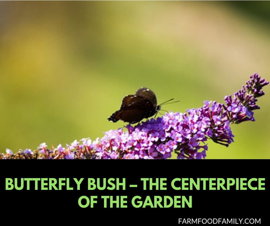 How to plant, grow and care for Butterfly bush