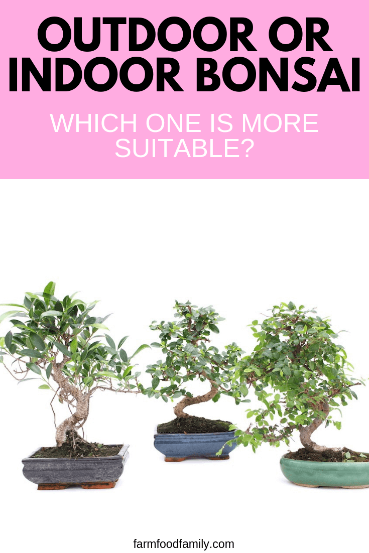 Outdoor or indoor bonsai: which one is more suitable?