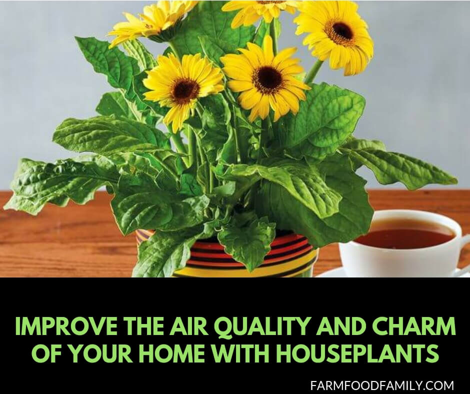 Houseplants Improve the Air Quality and Charm of Your Home