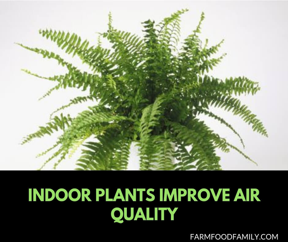 10 houseplants improve air quality