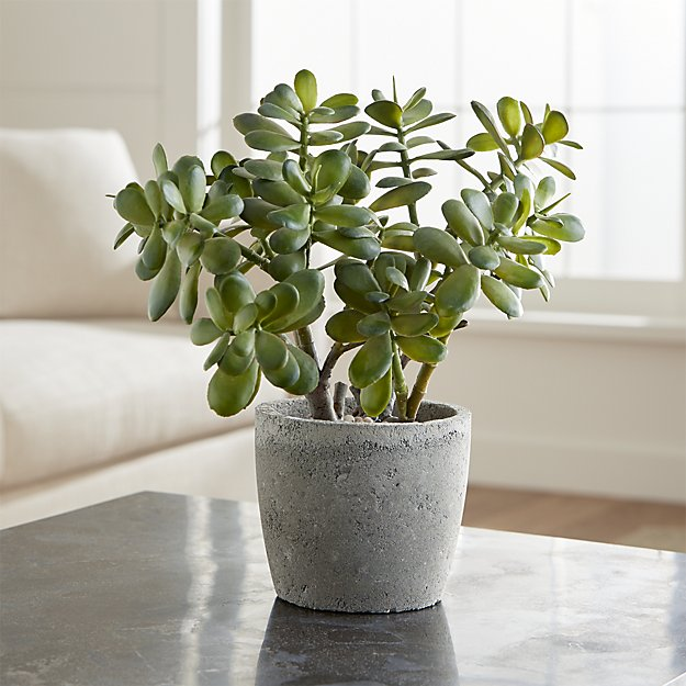 Jade plant   Child and Pet Safe Houseplants: Non-Toxic Indoor Plants   FarmFoodFamily