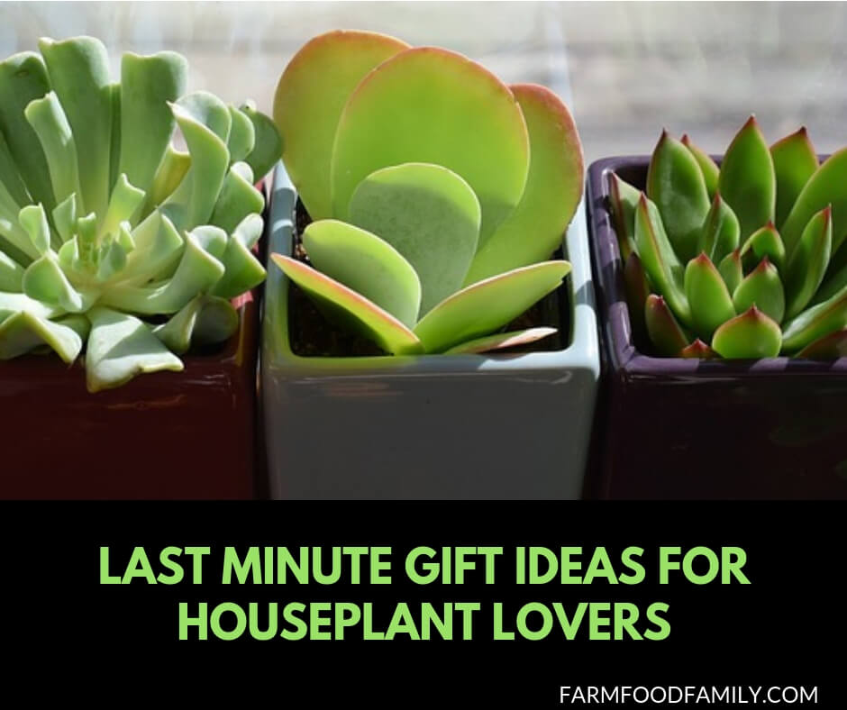 Last minute gift ideas for houseplant lovers