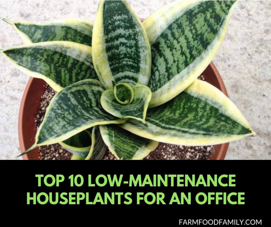 10 Low Maintenance houseplants for an office