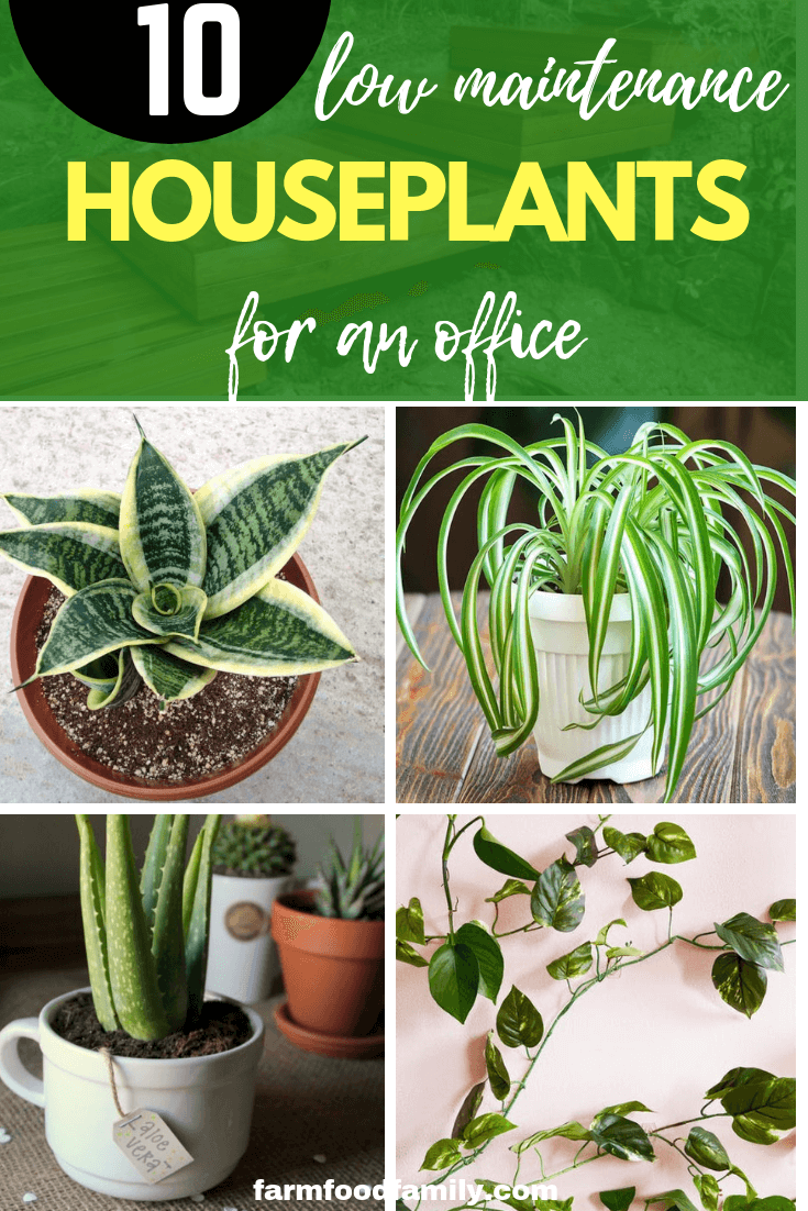 Top 10 Low-Maintenance Indoor Plants for an Office that Thrive in Artificial Light