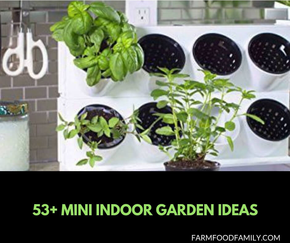 53+ Mini Indoor Garden Ideas
